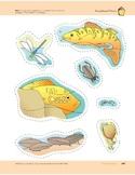 Pond Animals: Storyboard Pieces