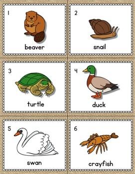Pond Animals Kindergarten