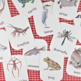 Pond Animals and Plants: 3-Part flash cards - wetland flor