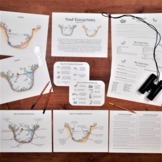 Pond Ecosystem Pack: science activities and worksheets