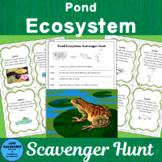 Pond Ecosystem Scavenger Hunt