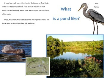 Pond Habitat Power Point