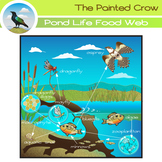 Pond Life Food Web Clip Art - Aquatic Ecosystem