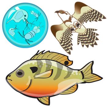 Pond Life Food Web Clip Art - Aquatic Ecosystem