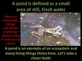Pond Life (Totally ANIMATED)