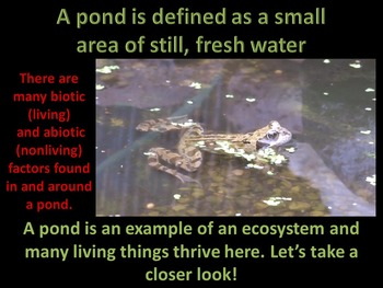 Pond Life (Totally ANIMATED)