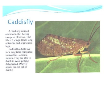 Insects: A Pond Study