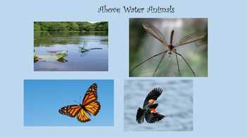 Pond Unit: Layers, Parts and Animals in the Pond