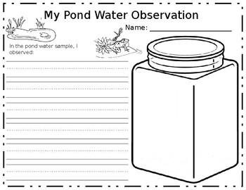 Pond Water Observation Sheet