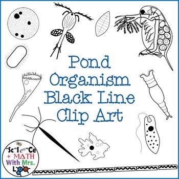Pond Water Organism Clipart Set: Amoeba, Paramecium, and More!