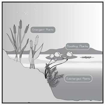 Pond Zones and Aquatic Plants Clip Art