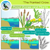 Pond Zones and Aquatic Plants Clip Art