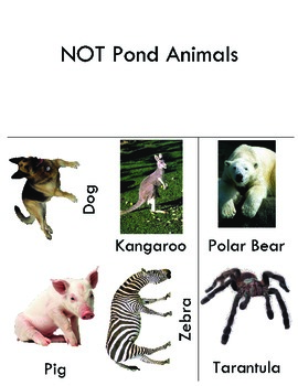 Pond or Not Science Table Activity