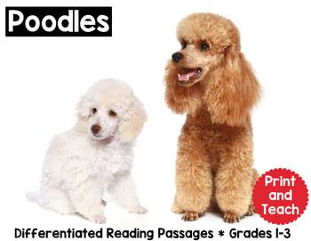 Poodle Reading Passage