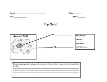 Pop Quiz on an Animal Cell