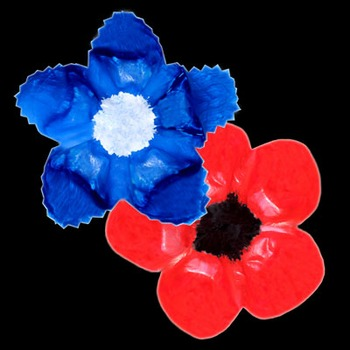 Poppy or Cornflower for Remembrance Day
