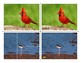 Popular Birds - Puzzle Cards and Control Cards