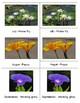 Popular Birth flowers: Montessori Three Part Cards