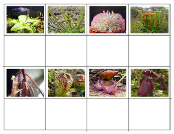 Popular Carnivorous plants: Mini Matching Cards