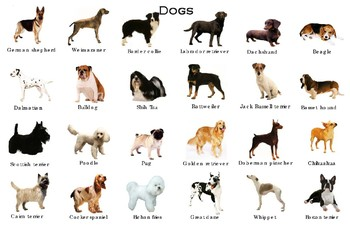 """Popular Dogs Poster:  """"Ledger/Tabloid"""" (11 x 17 inches)"""