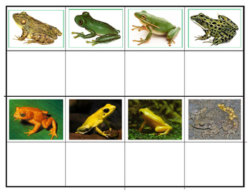 Popular  Frogs and Toads: Mini Matching Cards