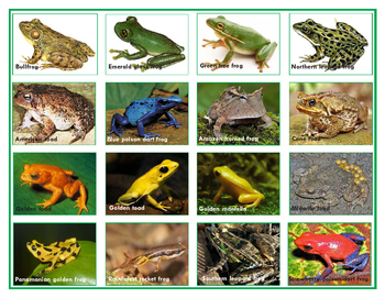 Popular  Frogs and Toads: Mini Match-up Cards