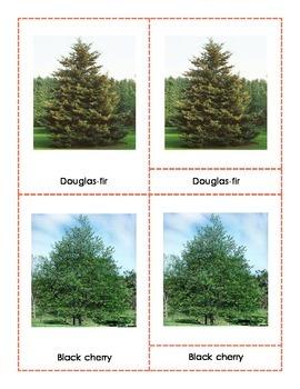 Popular North American Trees Montessori Three Part Cards (Revised)