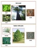 Popular North American Trees Montessori Three Part Cards (