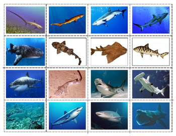 Popular Sharks: Mini Matching and Vocabulary Enrichment  Cards