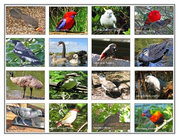 Popular  birds  of Australia: Mini Matching Cards