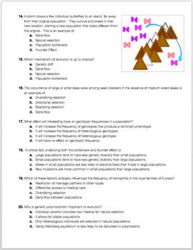 Population Genetics Exam