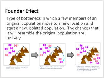 Population Genetics PPT Notes