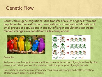 Population Genetics: Selection, Isolation, Speciation Power Point
