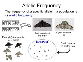 Population Genetics and Hardy Weinberg Presentation