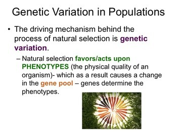 Population Genetics and Hardy Weinberg Presentation