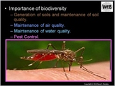Biodiversity Lesson, Population Sampling