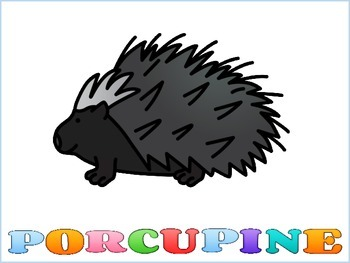 Porcupine Graphic Organizers