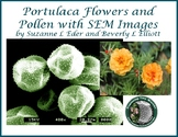 Portulaca Flowers and Pollen with SEM Images STEM