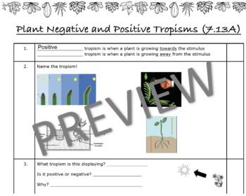 Positive and Negative Tropisms Worksheet