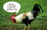 Poster - Chicken Crossing Road