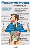 Poster: My Digestive System