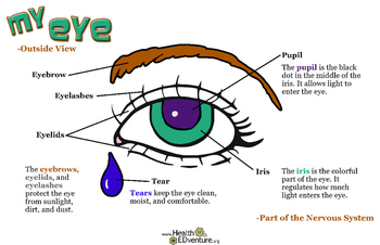 Poster: My Eye - Outside View