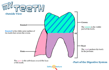 Poster: My Teeth - Outside View