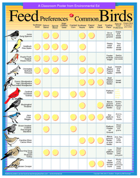 POSTER  Seed preference of common birds.