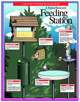 POSTER  Typical Bird Feeding Station