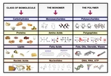Poster categorizing four main types of biomolecules (with monomers and polymers)