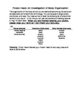 Potato Head: An investigation of Body Organization
