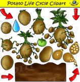 Potato Life Cycle Clipart