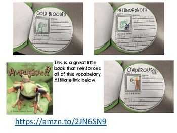 Frog Science, Math and Literacy Activities Book Craftivity