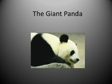 The Giant Panda-Power Point Lesson With Questions